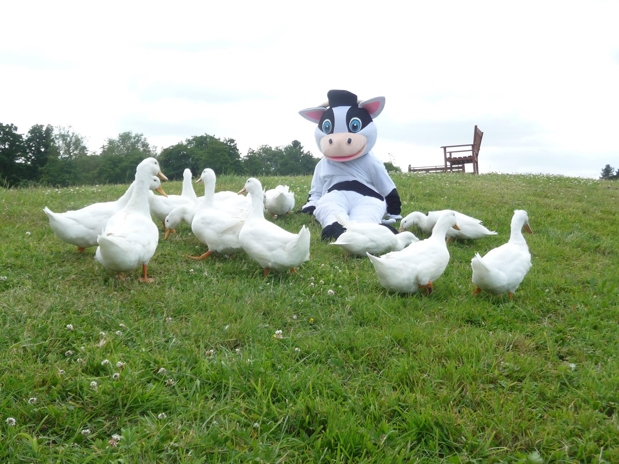 The ducks with minnie moo at 4 Kingdoms