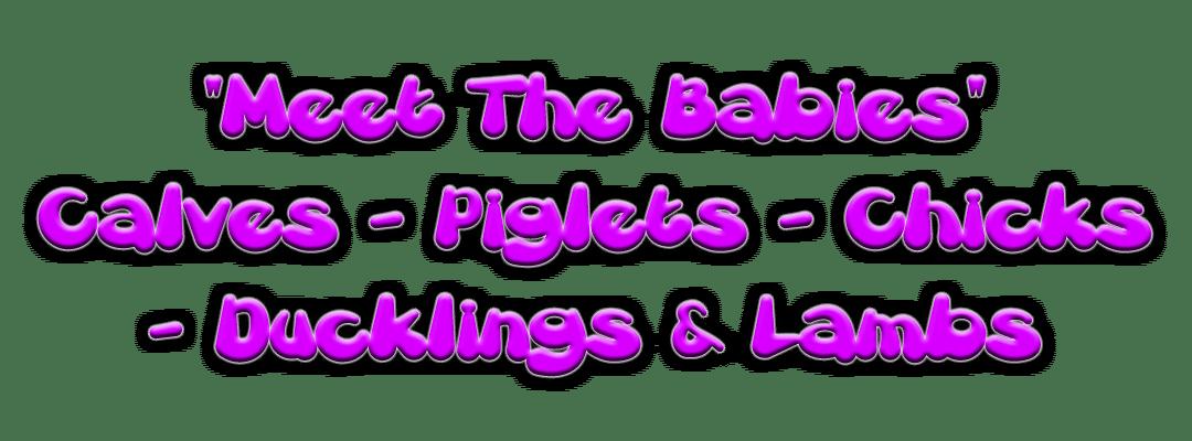 Meet the baby animals