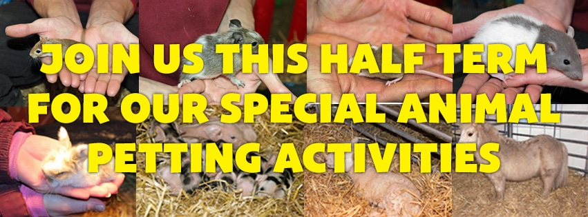 animal petting at 4 Kingdoms Adventure Park & Family Farm