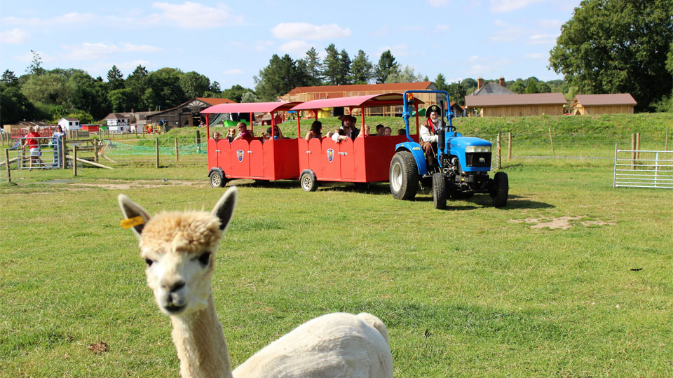 Outdoor-tractor-ride-with-the-baby-llamas-image-1