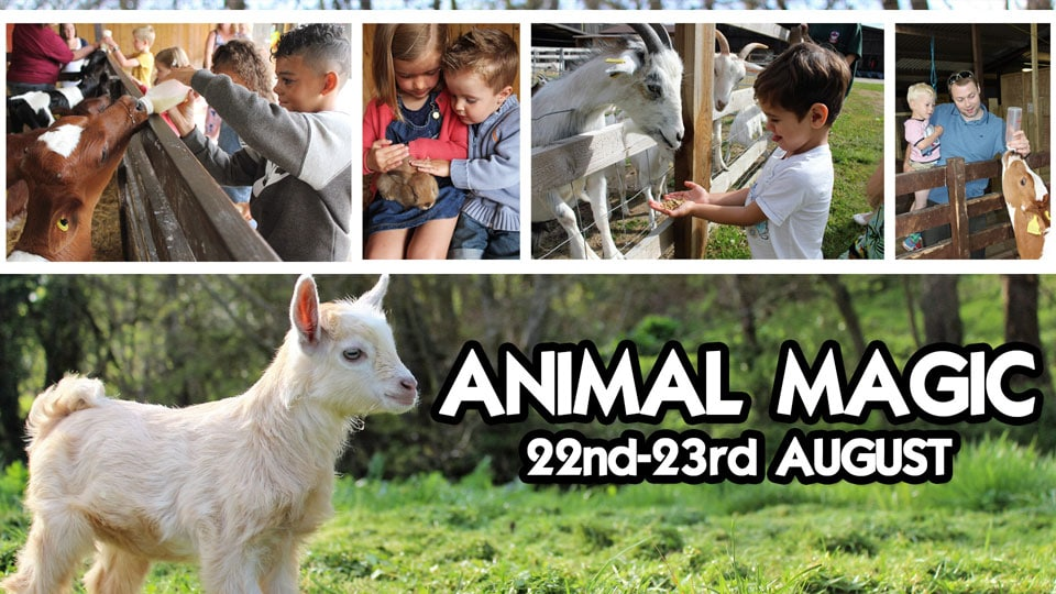 animal-magic-event-august-2017