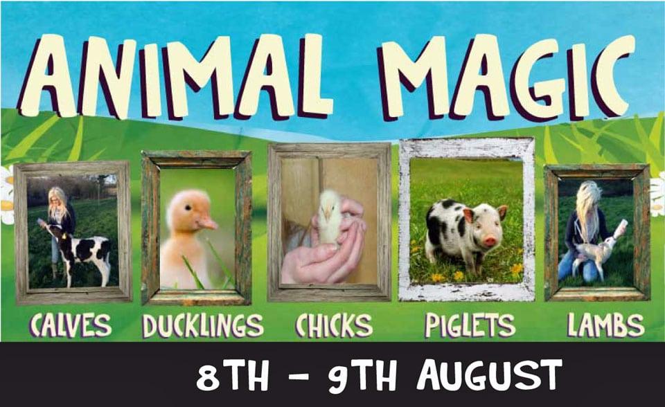 Animal-Magic-event-8thAugust