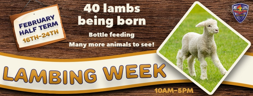 Animal Week FB Banner Square